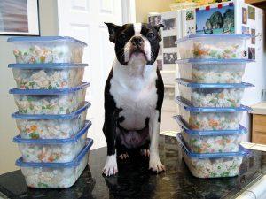 Kutya jutalomfalat