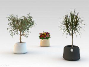Légtisztító növények